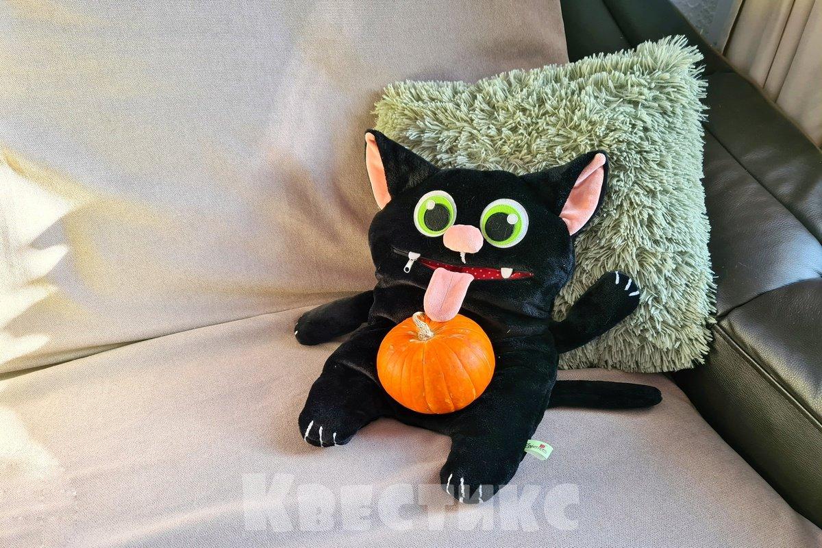 черный кот хэллоуин
