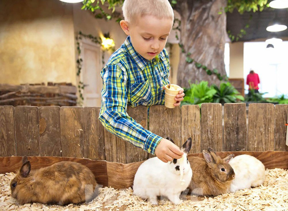 Контактный зоопарк для детей