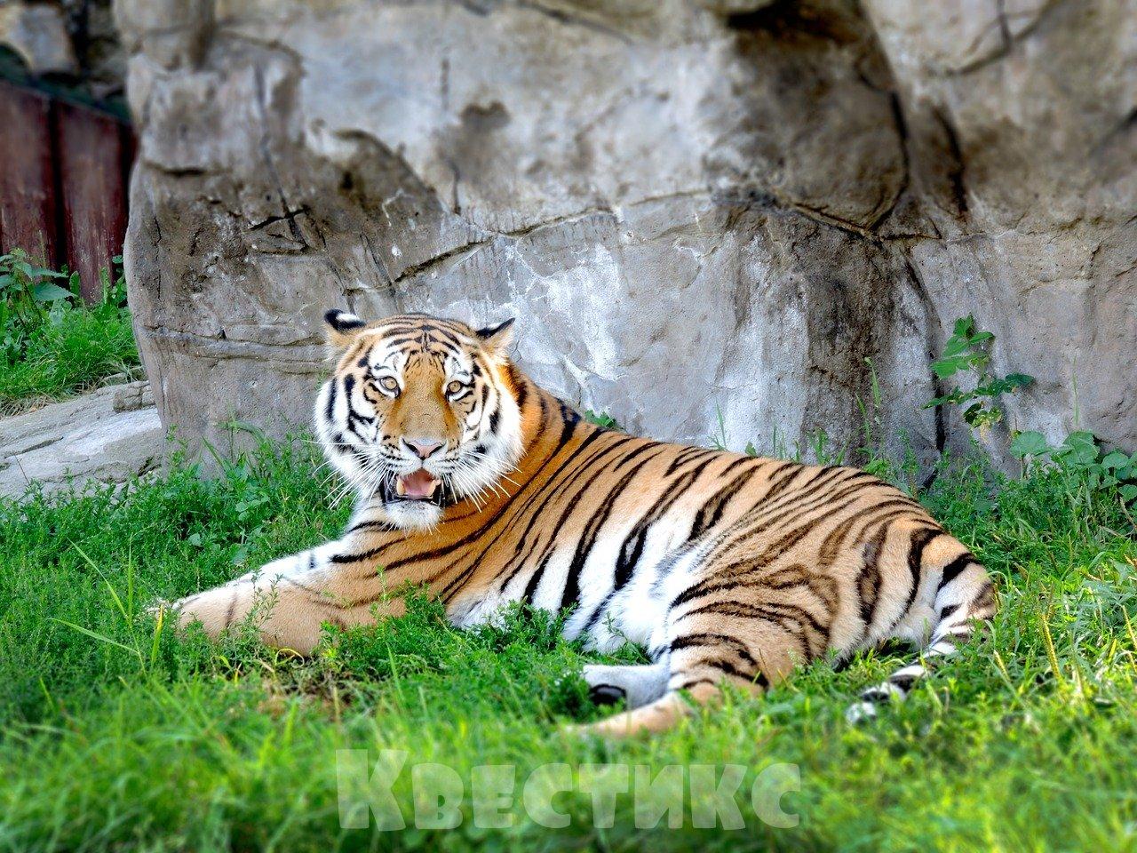 выпускной в московском зоопарке