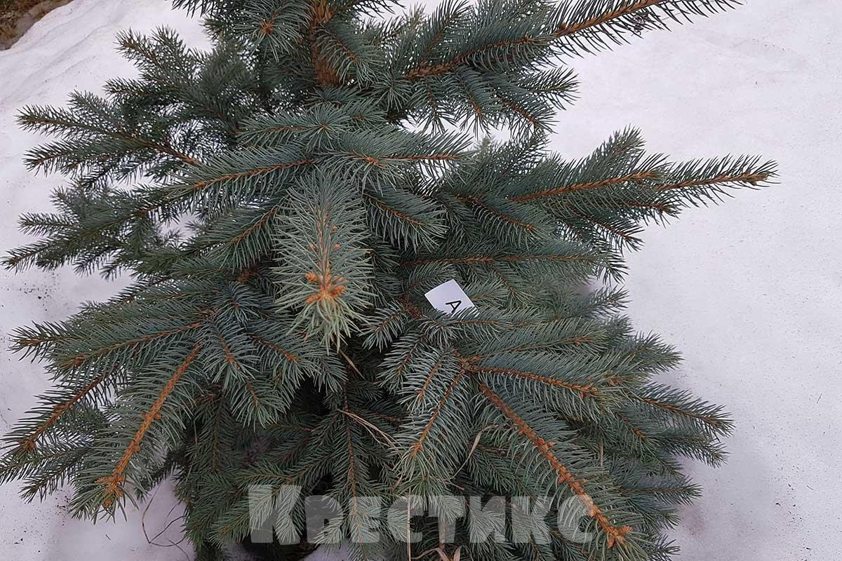 елка на даче спрятанная буква
